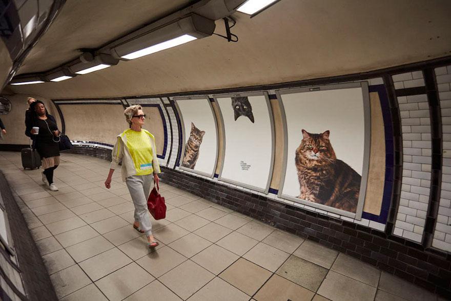foto-gatti-sostituiscono-pubblicita-metropolitana-londra-cats-glimpse-09