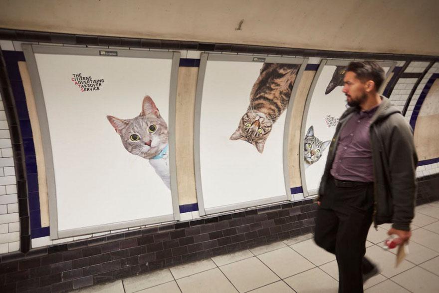 foto-gatti-sostituiscono-pubblicita-metropolitana-londra-cats-glimpse-10