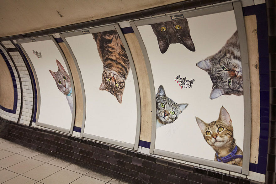 foto-gatti-sostituiscono-pubblicita-metropolitana-londra-cats-glimpse-12