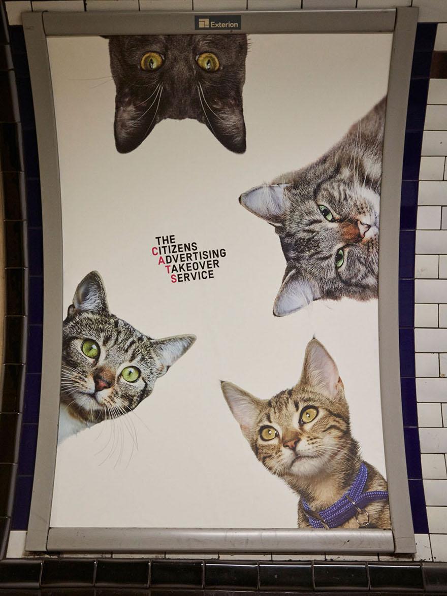 foto-gatti-sostituiscono-pubblicita-metropolitana-londra-cats-glimpse-13
