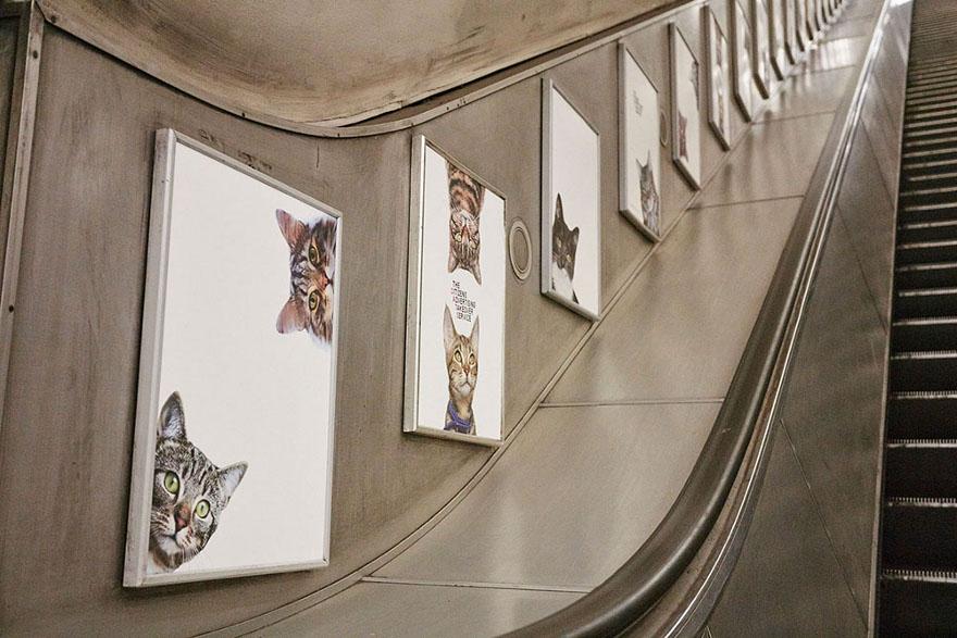 foto-gatti-sostituiscono-pubblicita-metropolitana-londra-cats-glimpse-14