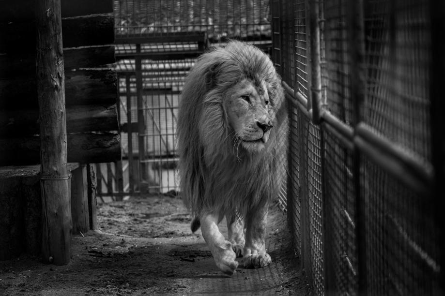 foto-zoo-come-lager-animali-maltrattati-born-free-foundation-05