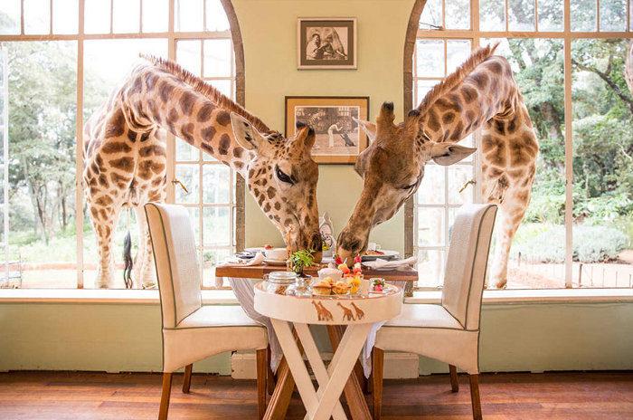 ristoranti-incredibili-bizzarri-originali-mondo-26
