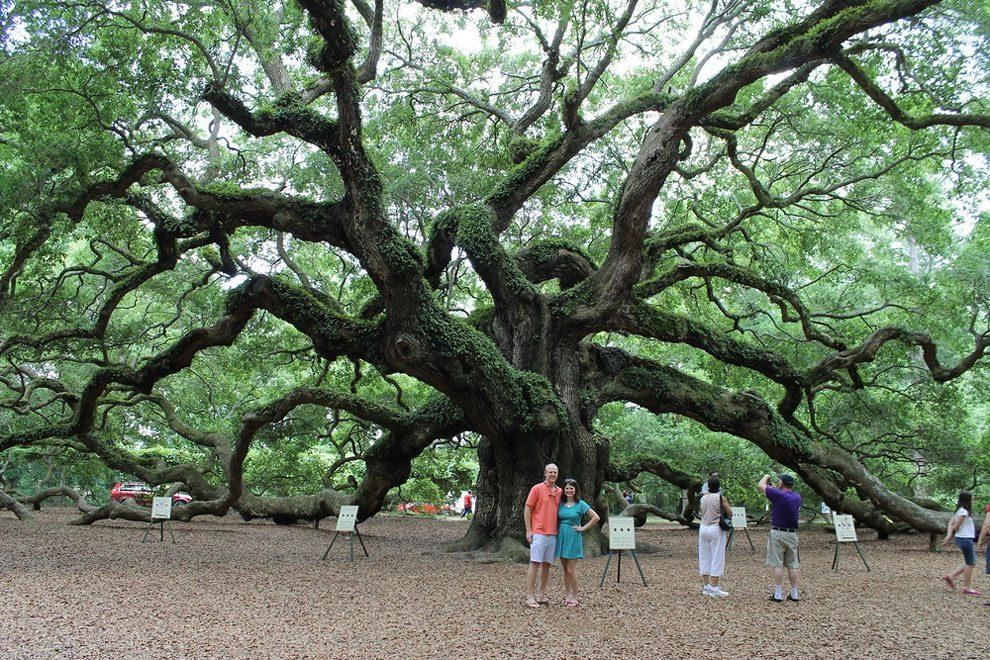 angel-oak-quercia-enorme-charleston-carolina-01