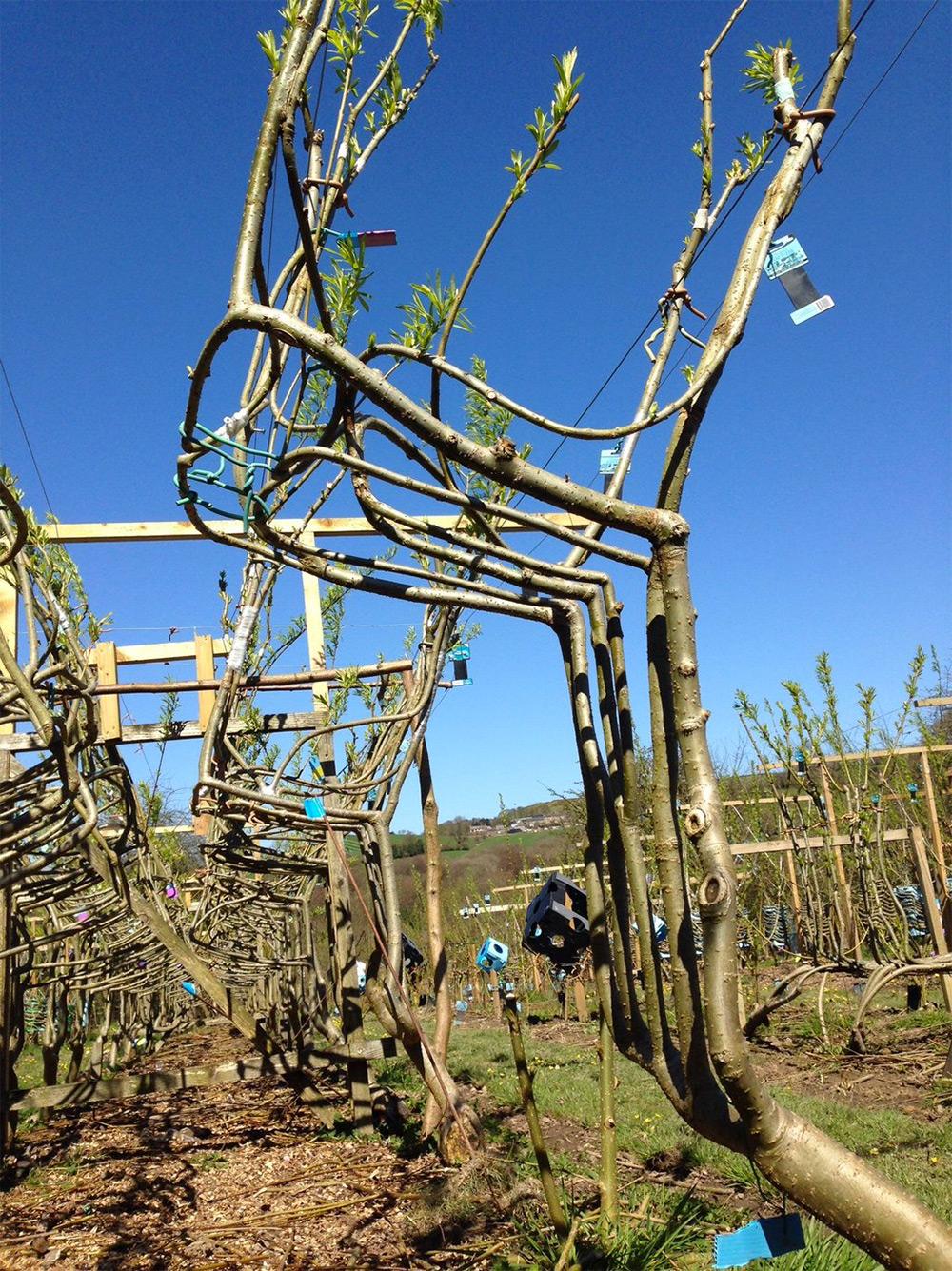 sedie-crescono-su-alberi-full-grown-gavin-munro-2