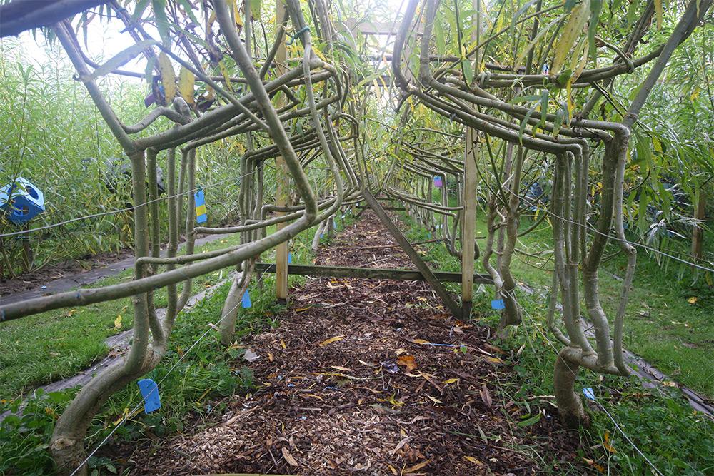 sedie-crescono-su-alberi-full-grown-gavin-munro-6