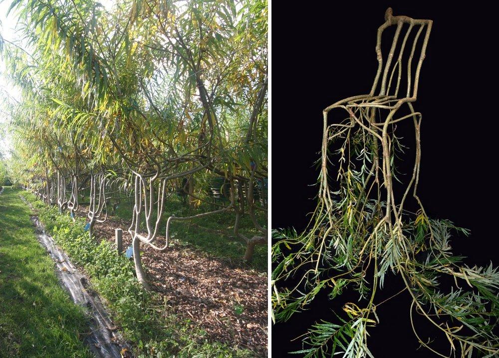 sedie-crescono-su-alberi-full-grown-gavin-munro-9