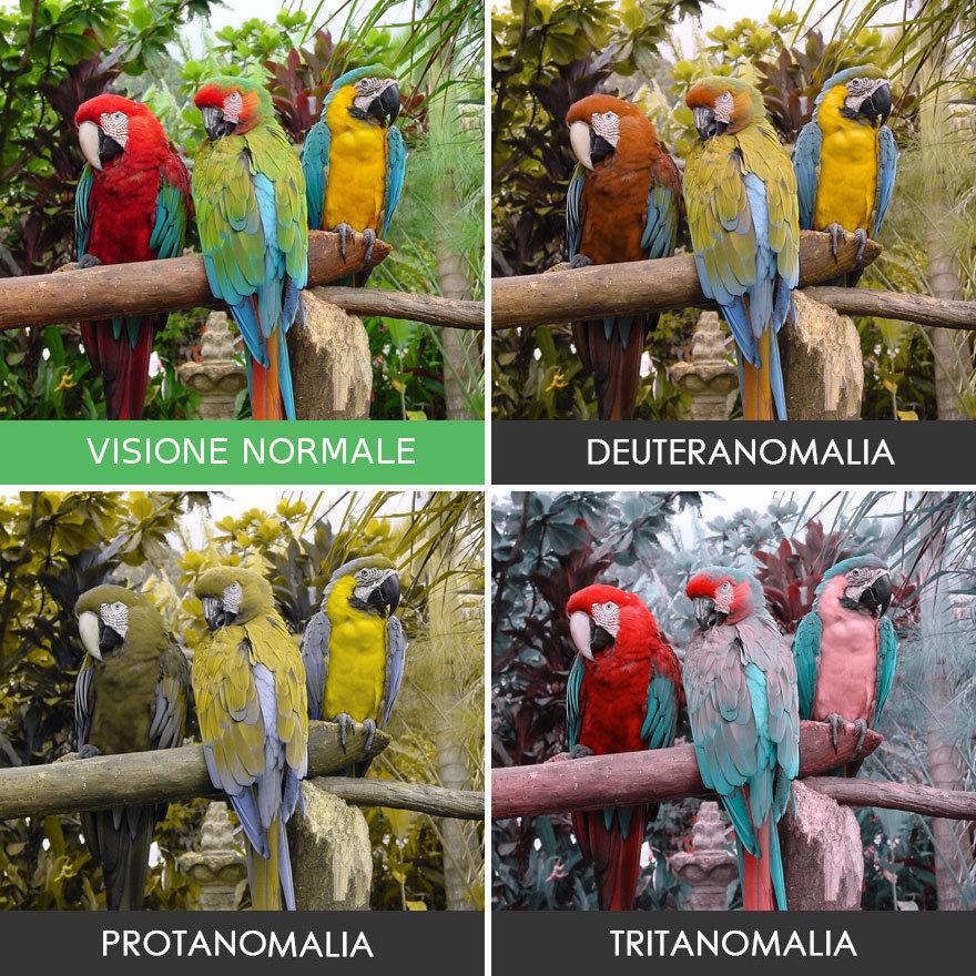 come-vedono-colori-daltonici-02