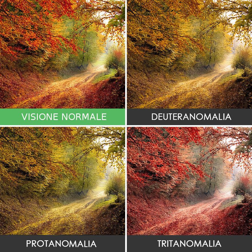 come-vedono-colori-daltonici-14