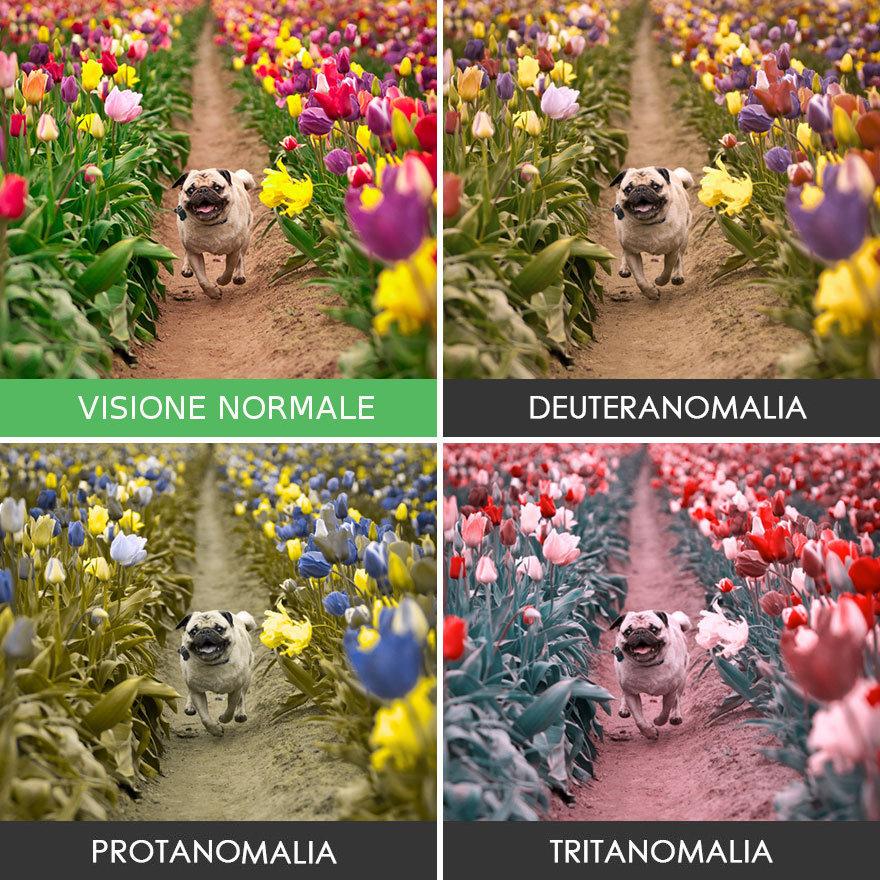 come-vedono-colori-daltonici-15