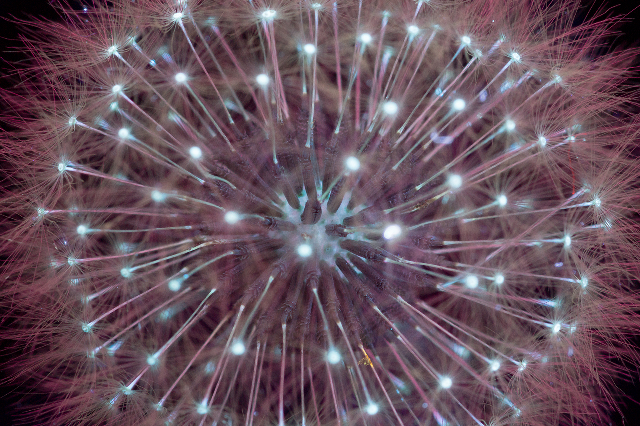 foto-piante-fiori-fluorescenza-ultravioletta-indotta-craig-burrows-08
