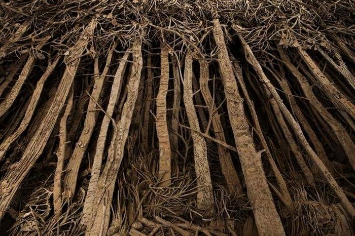 sculture-cartone-foreste-alberi-eva-jospin-02