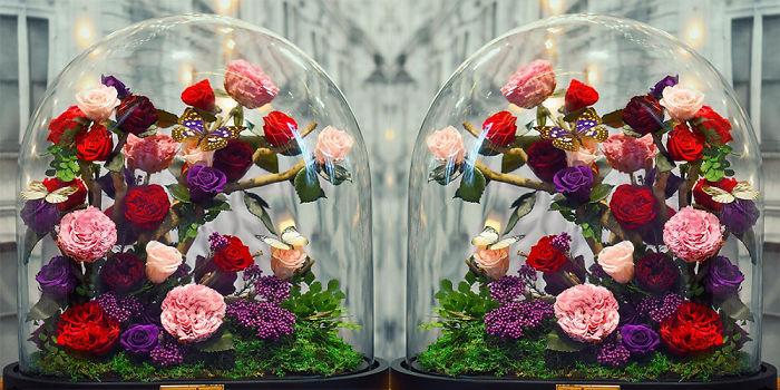 rose-eterne-bella-bestia-3-anni-forever-rose-01
