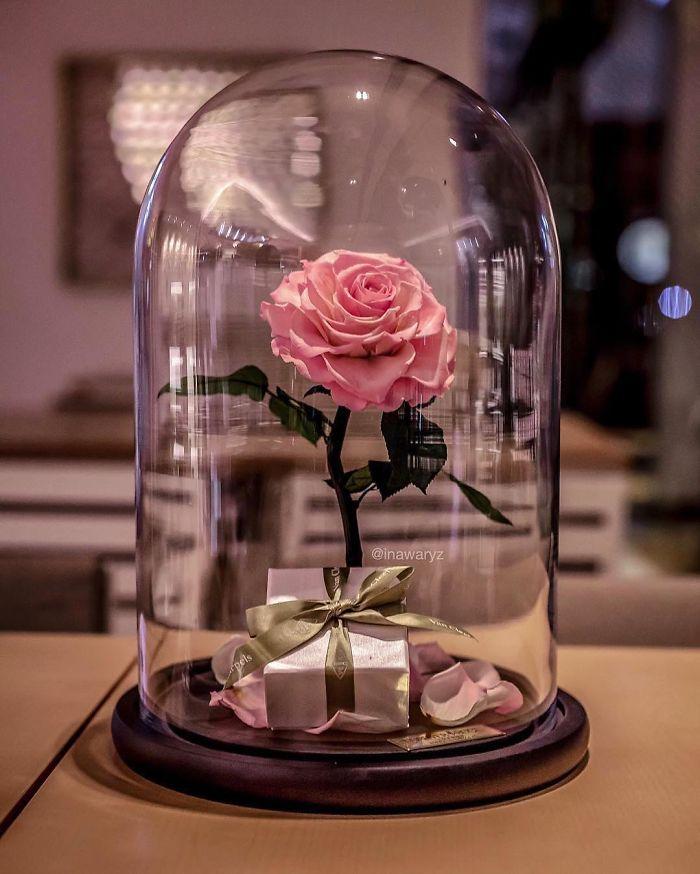 rose-eterne-bella-bestia-3-anni-forever-rose-05
