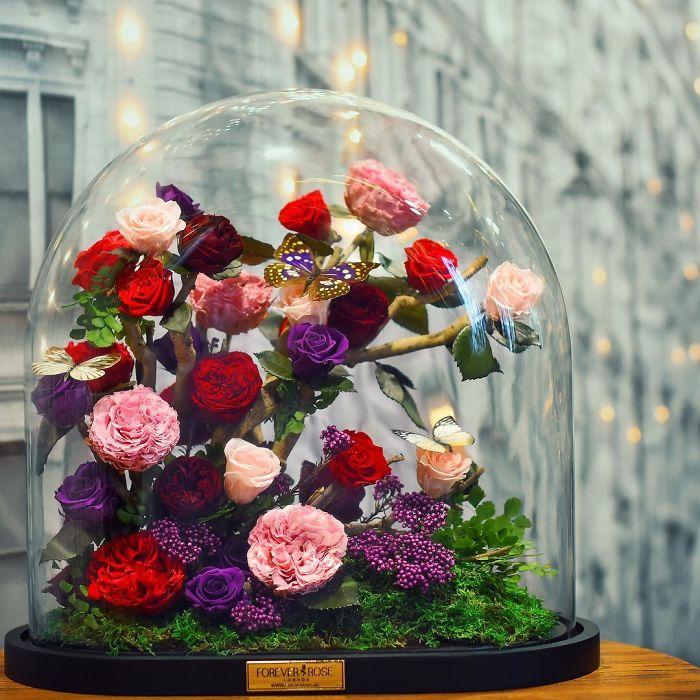 rose-eterne-bella-bestia-3-anni-forever-rose-06
