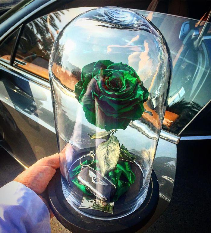 rose-eterne-bella-bestia-3-anni-forever-rose-07