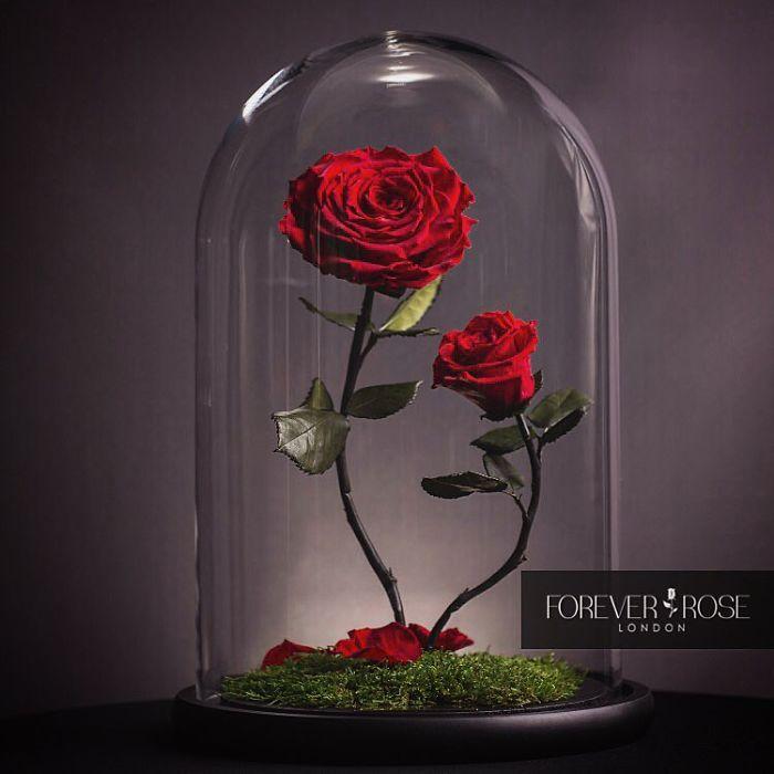 rose-eterne-bella-bestia-3-anni-forever-rose-08