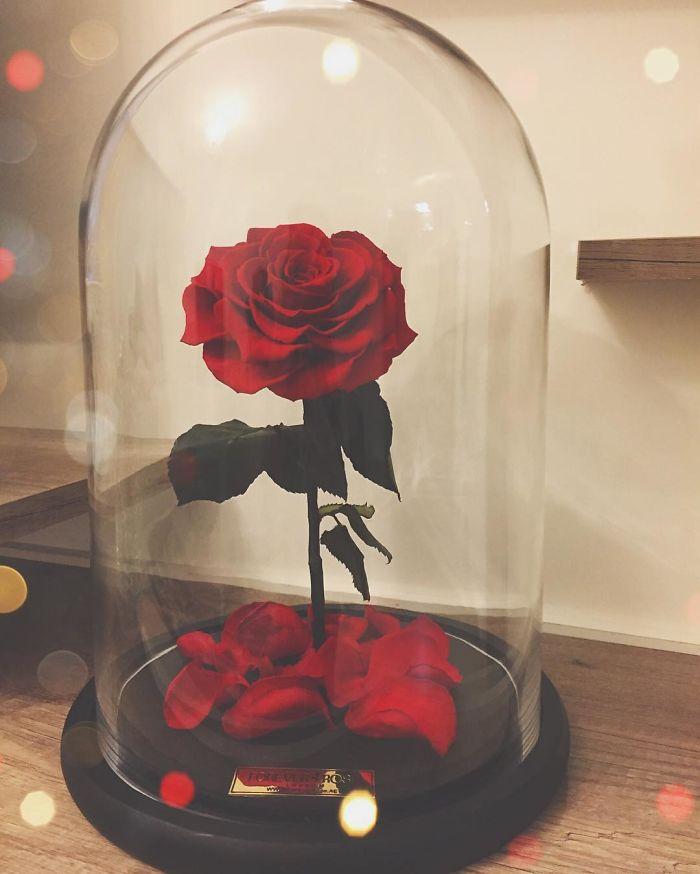 rose-eterne-bella-bestia-3-anni-forever-rose-10