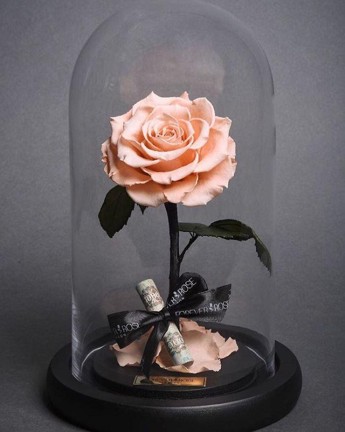 rose-eterne-bella-bestia-3-anni-forever-rose-11