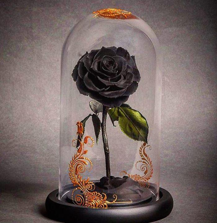 rose-eterne-bella-bestia-3-anni-forever-rose-12