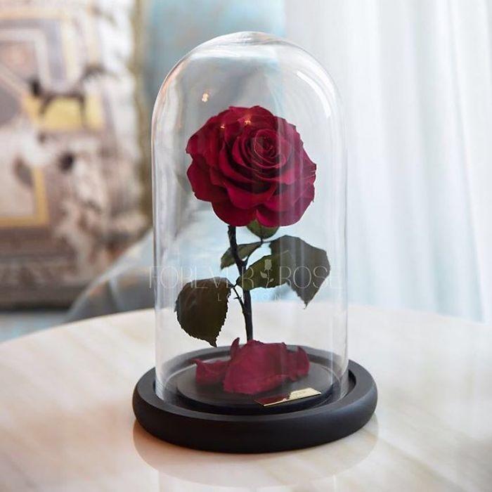 rose-eterne-bella-bestia-3-anni-forever-rose-14