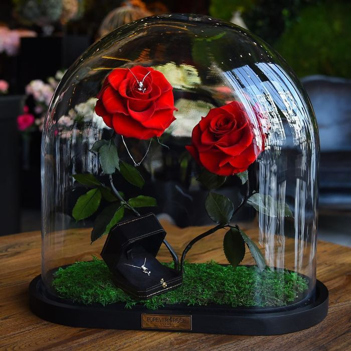 rose-eterne-bella-bestia-3-anni-forever-rose-16