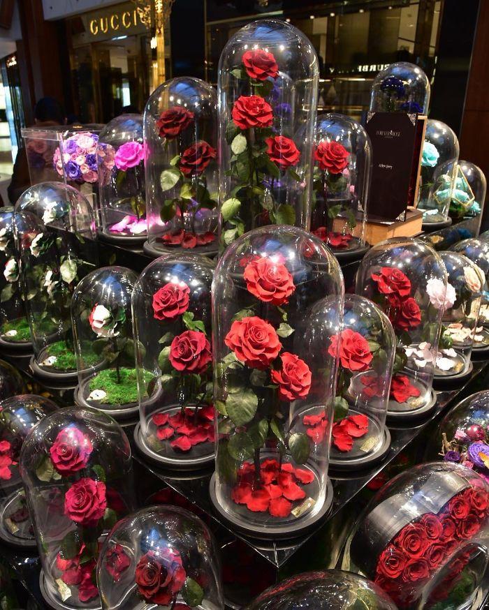 rose-eterne-bella-bestia-3-anni-forever-rose-17