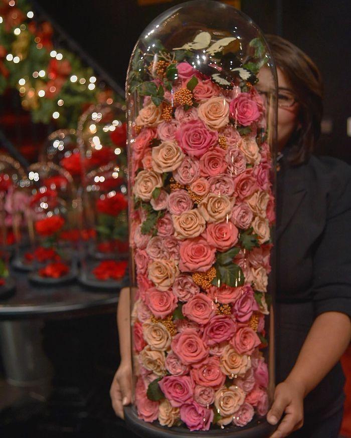 rose-eterne-bella-bestia-3-anni-forever-rose-19