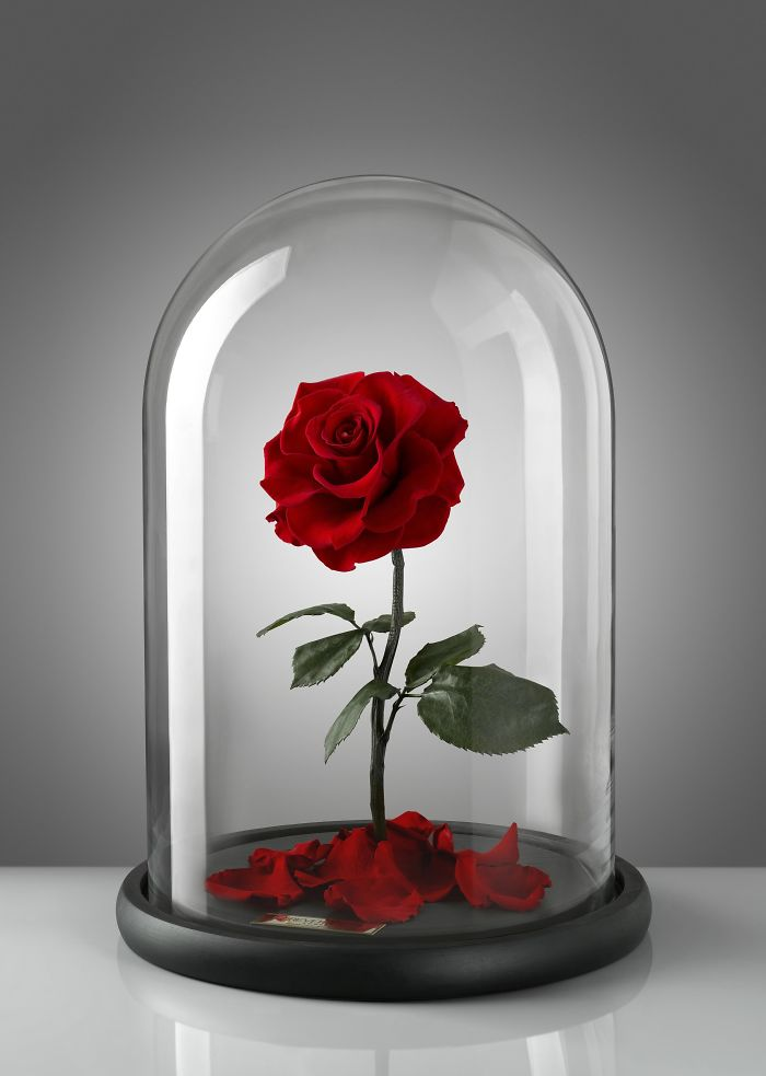 rose-eterne-bella-bestia-3-anni-forever-rose-20