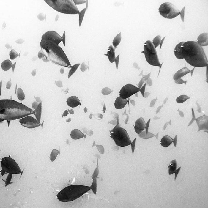 fotografia-bianco-nero-paesaggi-hengki-koentjoro-03