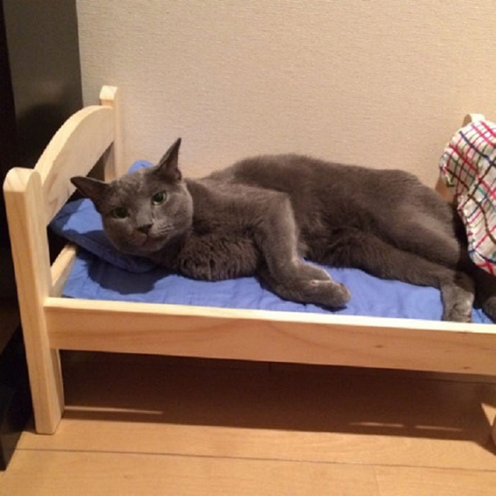 Ikea dona lettini per bambole ai gatti di un rifugio per animali e sono adorabili keblog - Casa delle bambole ikea ...