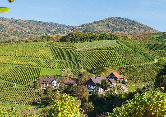 Stanze Dentro Enormi Botti B&B Schlafen im Weinfass Germania