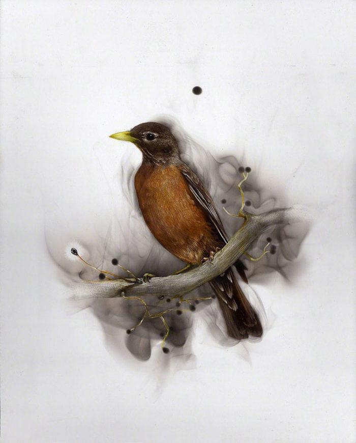 uccelli-dipinti-con fuoco-fumo-fumage-steven-spazuk-03