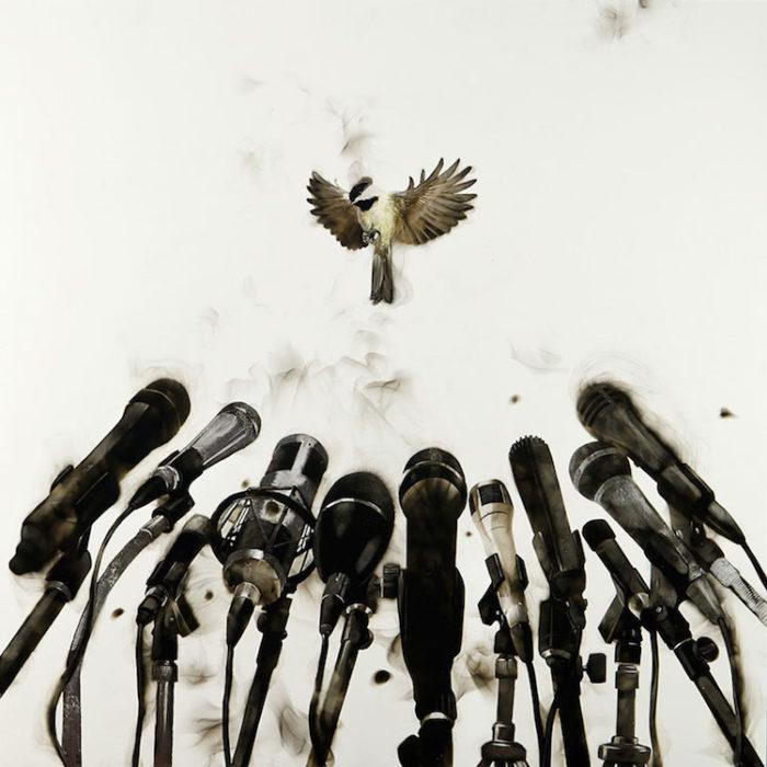 uccelli-dipinti-con fuoco-fumo-fumage-steven-spazuk-07