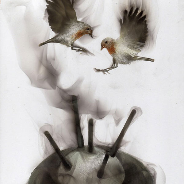 uccelli-dipinti-con fuoco-fumo-fumage-steven-spazuk-10