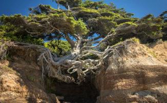 10 alberi incredibili che si rifiutano di morire, mostrano la potenza della vita