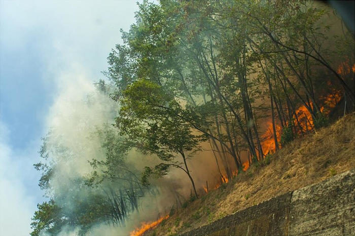 Come ogni anno, il problema degli incendi. Solo che questa volta io ci sono passato dentro. Fotografando.
