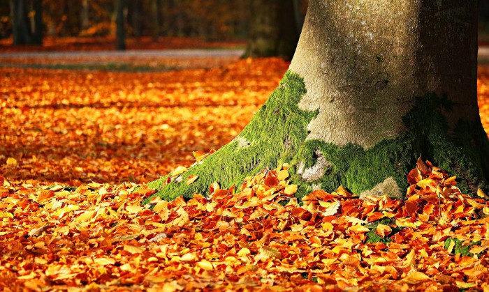 8 bellissimi luoghi nel mondo da visitare in autunno