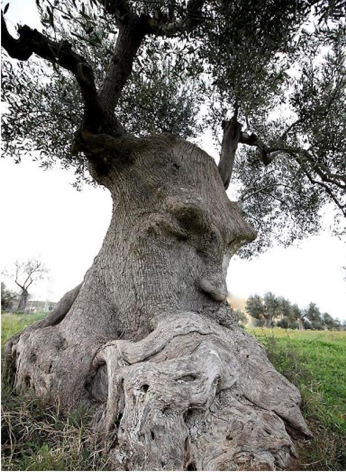 40 alberi che sembrano qualcos'altro