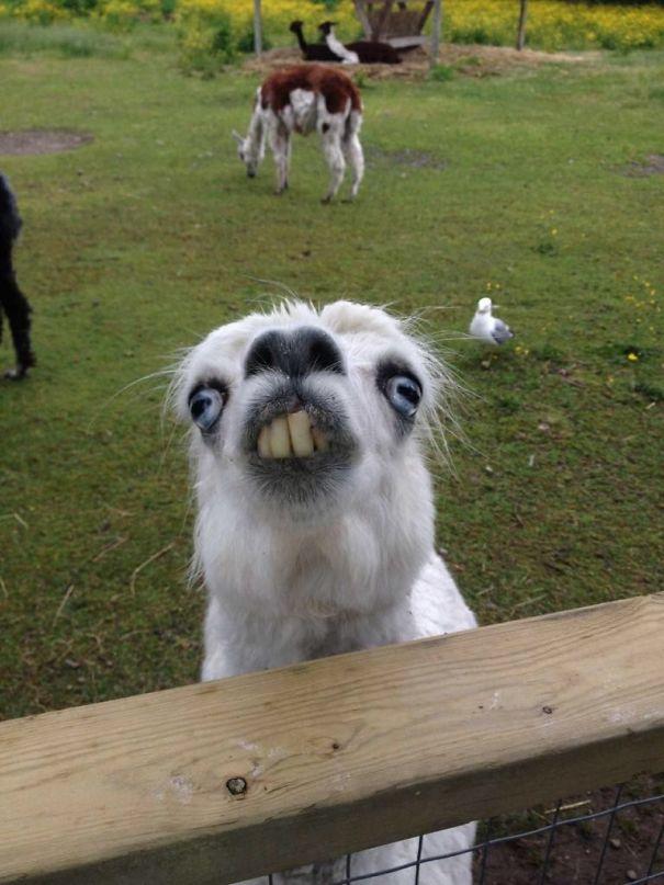Super 50 divertenti immagini di animali poco fotogenici - KEBLOG MR49