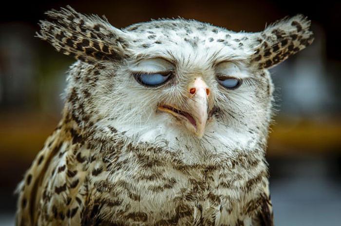 50 divertenti immagini di animali poco fotogenici
