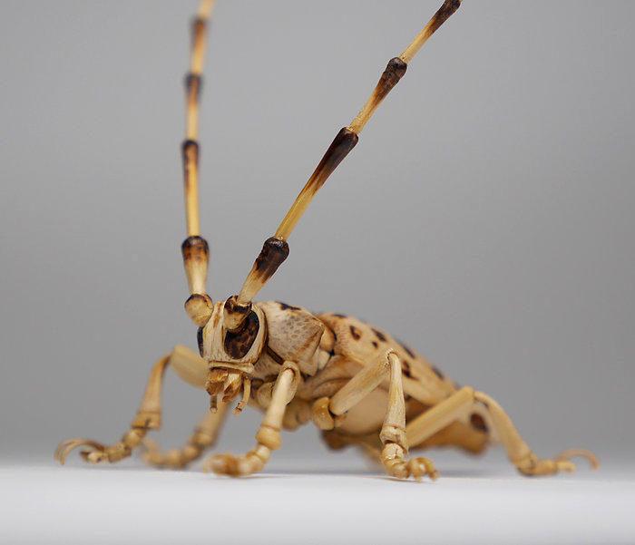 Bellissimi insetti realistici realizzati in bambù
