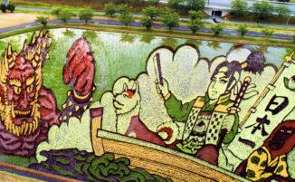 Diverse varietà di riso formano incredibili disegni in larga scala