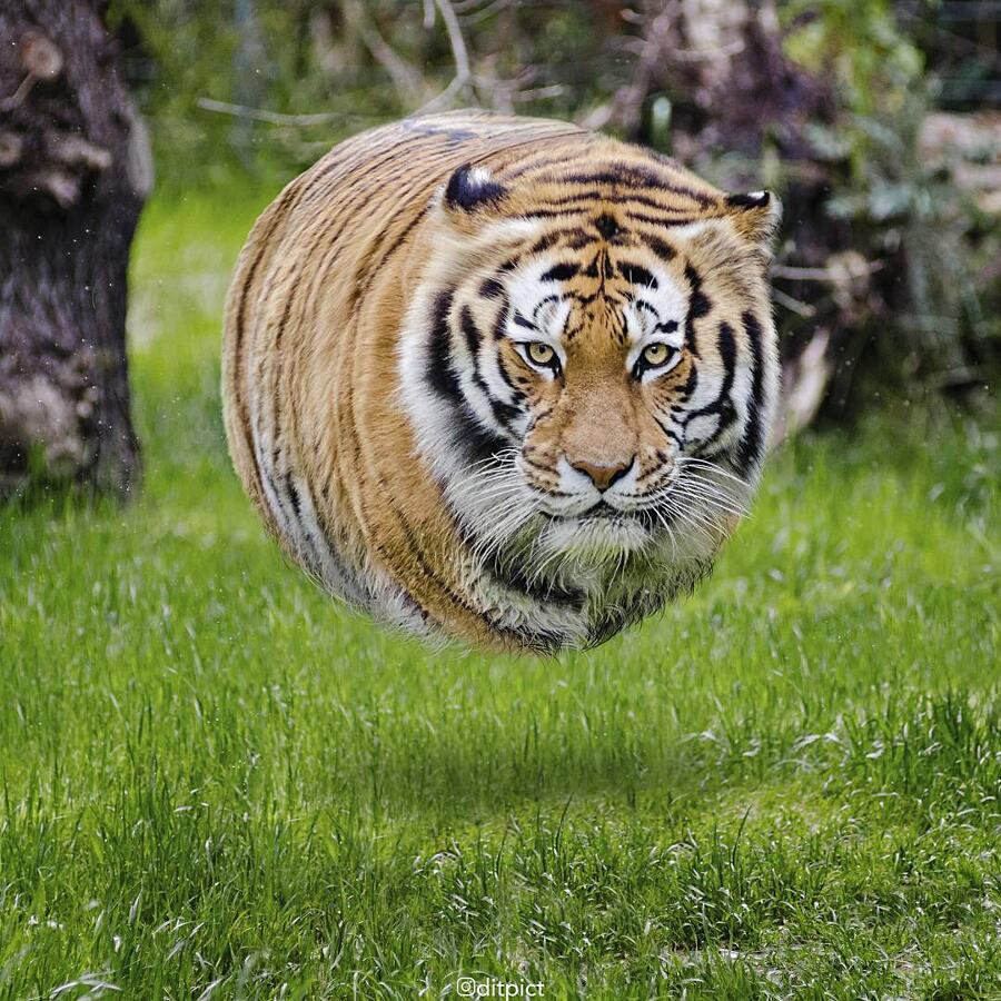 Animali Sferici Aniball Aditya Aryanto