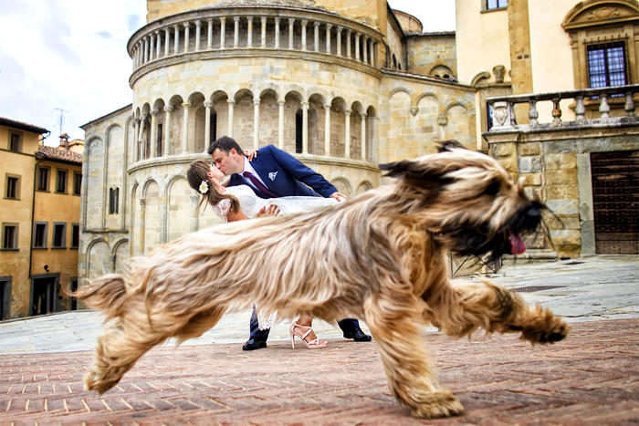 Divertenti foto mostrano come simpatici animali rubano la scena agli sposi