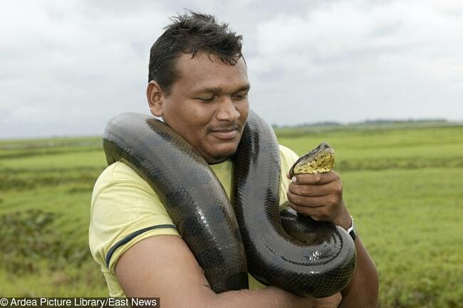 Il serpente più grande del mondo