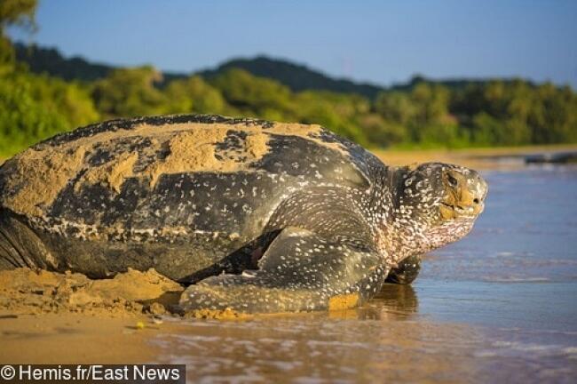 La tartaruga più grande del mondo