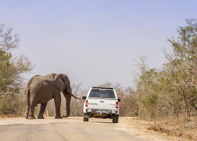 L'animale terrestre più grande del mondo
