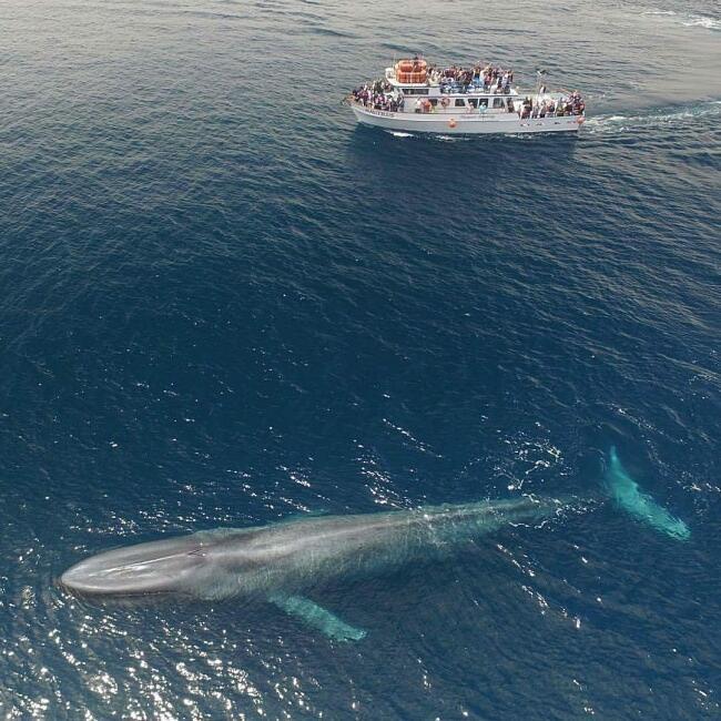 Animale più grande del mondo