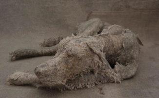 Vecchie stoffe logore si trasformano in bellissime sculture di cani